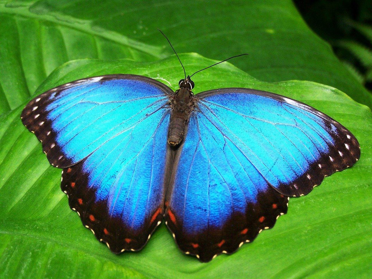 Helpen bij Dagbesteding de Vlinder